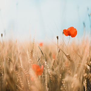 picture of a meadow